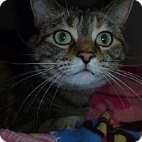 Adopt A Pet :: Luna Mae - Hamburg, NY