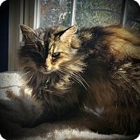 Adopt A Pet :: Melissa - Fairborn, OH