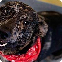 Adopt A Pet :: Dewey - NH - Warren, ME