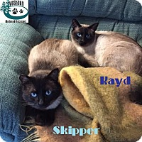 Adopt A Pet :: Skipper & Kayd-2 for 1 Special - Huntsville, ON