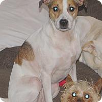 Adopt A Pet :: Zoe - Conesus, NY