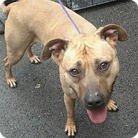 Adopt A Pet :: Bayleigh - Ashtabula, OH