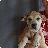 Adopt A Pet :: Xai - Oviedo, FL