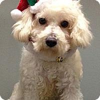 Adopt A Pet :: Wako - South Gate, CA