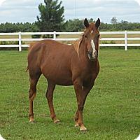Adopt A Pet :: Amirah - Cantonment, FL