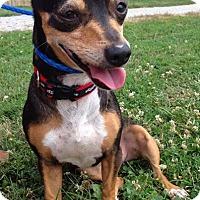Adopt A Pet :: Angie - Nashville, TN