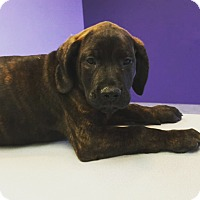 Adopt A Pet :: 2 - Scottsdale, AZ