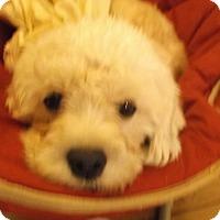 Adopt A Pet :: Annie - Foster, RI
