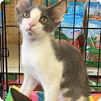 Adopt A Pet :: Jordan - Gilbert, AZ