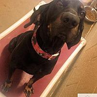 Adopt A Pet :: Jethro - Eighty Four, PA