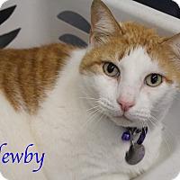 Adopt A Pet :: Newby - Bradenton, FL