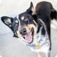 Adopt A Pet :: Nixon - Salt Lake City, UT
