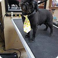 Adopt A Pet :: Miles - Salamanca, NY