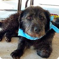 Adopt A Pet :: Tobe - Spring, TX