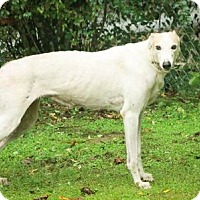 Adopt A Pet :: Kay Carmella - Knoxville, TN