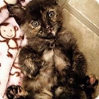 Adopt A Pet :: Bogie - Ocala, FL