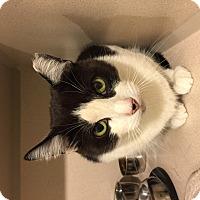 Adopt A Pet :: Milo - New York, NY