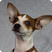 Adopt A Pet :: Mickey - Minneapolis, MN