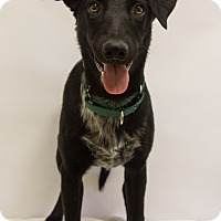 Adopt A Pet :: Sukha - Mission Viejo, CA