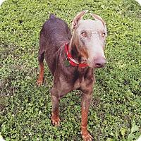 Adopt A Pet :: Dalton - New Richmond, OH