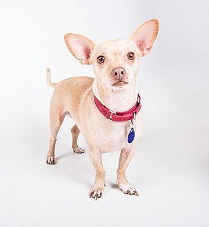 Chihuahua Mix Dog for adoption in Atlanta, Georgia - Enrique