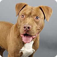 Adopt A Pet :: Stewart - Columbia, IL