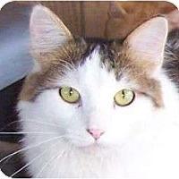 Adopt A Pet :: Calvin - Andover, KS
