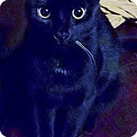 Adopt A Pet :: Rosemary - Jacksboro, TN