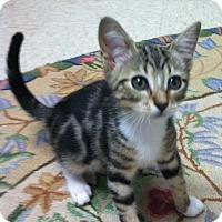 Adopt A Pet :: Jupiter - Trevose, PA