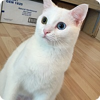 Adopt A Pet :: Selene - Hanna City, IL