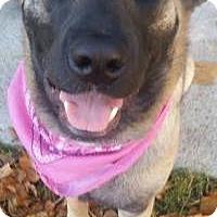 Adopt A Pet :: Phoenix - Saskatoon, SK