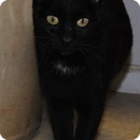 Adopt A Pet :: Licorice - Ridgeland, SC