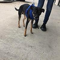 Adopt A Pet :: Peachtree - Houston, TX