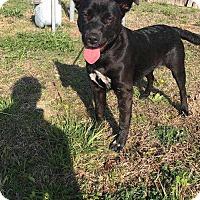 Adopt A Pet :: Gypsy - McCurtain, OK