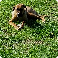Adopt A Pet :: MAX - LaGrange, KY