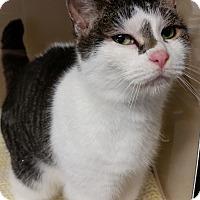 Adopt A Pet :: Nora - Franklin, NH