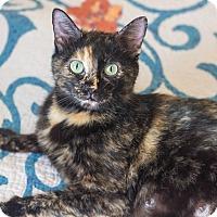 Adopt A Pet :: Olivia - Morgantown, WV