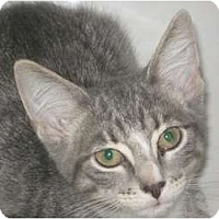 Adopt A Pet :: Rose - Jacksonville, NC