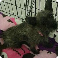 Adopt A Pet :: Willow - Phoenix, AZ