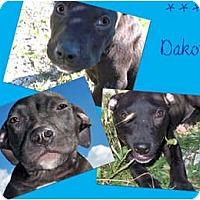 Adopt A Pet :: Dakota - Toledo, OH