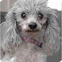 Adopt A Pet :: Piper - Rigaud, QC