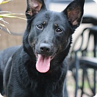 Adopt A Pet :: Zola - Nashville, TN