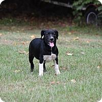 Adopt A Pet :: Jaci - Groton, MA