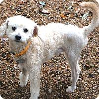 Adopt A Pet :: Trooper - Norwalk, CT