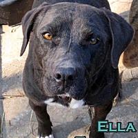 Adopt A Pet :: Ella - Boaz, AL