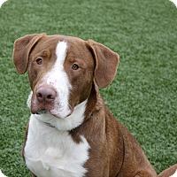 Adopt A Pet :: Titan - Columbia, IL