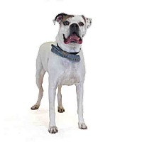 Adopt A Pet :: Narwhal - St. Cloud, FL