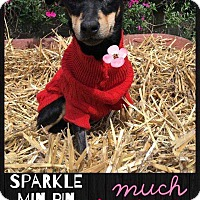 Adopt A Pet :: Sparkles - Allen, TX