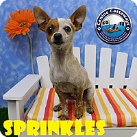 Adopt A Pet :: Sprinkles - Arcadia, FL