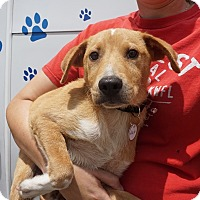 Adopt A Pet :: Ralph - Oviedo, FL